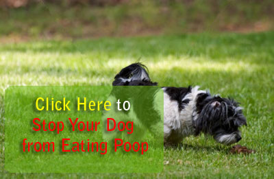 Dog Eating Habits Problems