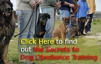 Dog Obedience Training