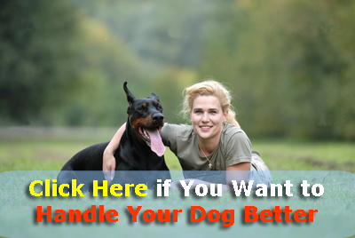 handle your dog better